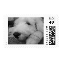 Old English Sheepdog Postage