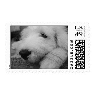 old english sheepdog postage stamp