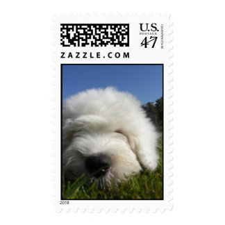 Old english sheepdog puppy stamp