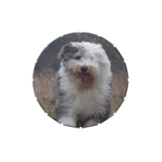 Old English Sheepdog Snip Snap Tin - Run Dog! Candy Tins