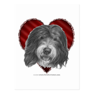 Old English Sheepdog with Heart Postcard