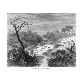 Old engraving- Landscape with cattle Postcard
