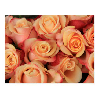 Old fahioned looking pink roses postcard