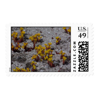 Old Faithful Flower Stamps