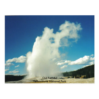Old Faithful @ Yellowstone National Park Postcard