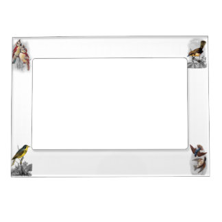 Old Fashioned Birds - Four Magnetic Picture Frame
