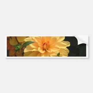 """Old Fashioned Orange Dahlia"" Car Bumper Sticker"