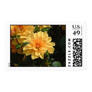 """Old Fashioned Orange Dahlia"" Postage"