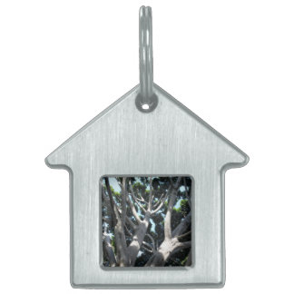 Old Fig Tree Pet Name Tag