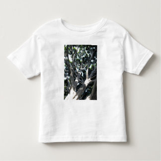 Old Fig Tree Toddler T-shirt