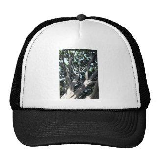 Old Fig Tree Trucker Hat