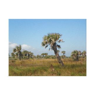 OLD FLORIDA SCRUB Canvas Print