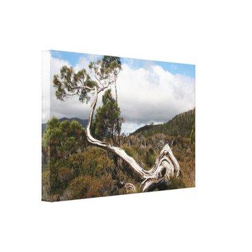 franwestphotography Old gnarled tree, Tasmania, Australia Canvas Print
