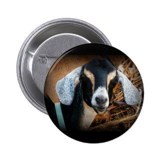 Old Goat Nubian Portrait Photo Pinback Buttons
