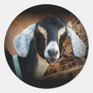 Old Goat Nubian Portrait Photo Classic Round Sticker
