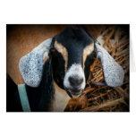 Old Goat Nubian Portrait Photo Greeting Card