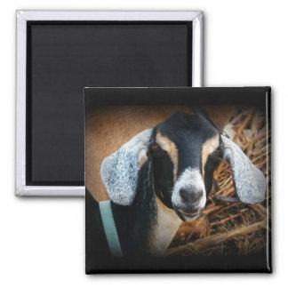 Old Goat Nubian Portrait Photo Magnet