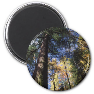 old growth 2 inch round magnet
