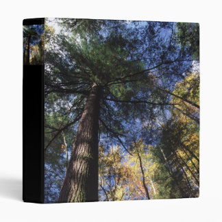old growth 3 ring binder