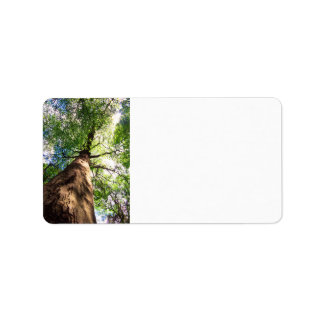 Old-Growth Beech Tree Address Label
