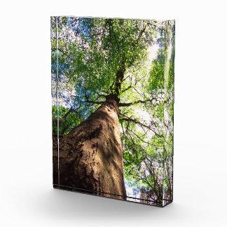 Old-Growth Beech Tree Award