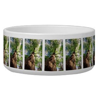 Old-Growth Beech Tree Bowl