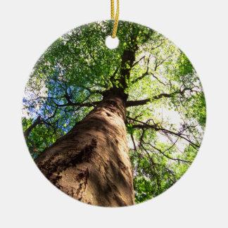 old growth beech tree ceramic ornament
