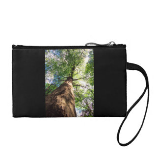 Old-Growth Beech Tree Coin Purse
