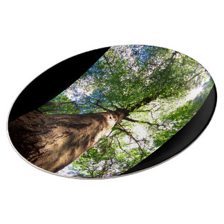 Old-Growth Beech Tree Dinner Plate