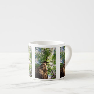 Old-Growth Beech Tree Espresso Cup