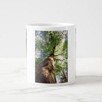 Old-Growth Beech Tree Giant Coffee Mug