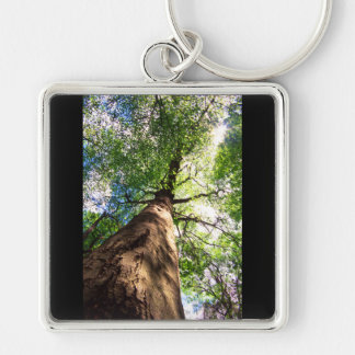 Old-Growth Beech Tree Keychains