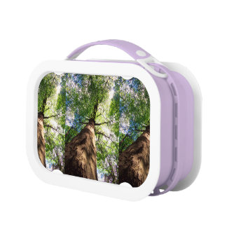 Old-Growth Beech Tree Lunch Box