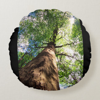 Old-Growth Beech Tree Round Pillow