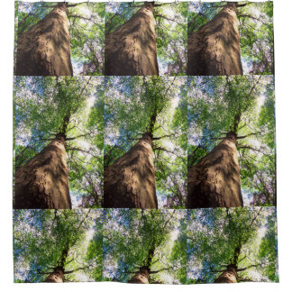 Old-Growth Beech Tree Shower Curtain