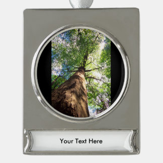 Old-Growth Beech Tree Silver Plated Banner Ornament