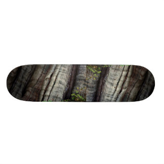 Old growth forest, British Columbia, Canada Photo Skate Deck