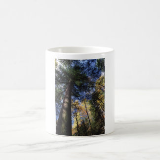 Old-Growth Forest Coffee Mug