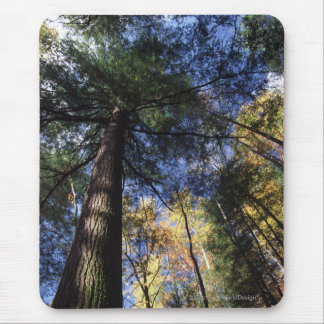 Old Growth Forest Mouse Pad