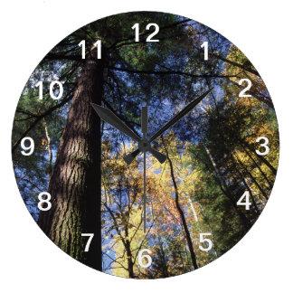 old growth hemlock tree large clock