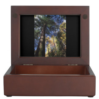 old growth hemlock tree memory box