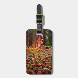 Old-growth Ponderosa tree with pine cones Bag Tag
