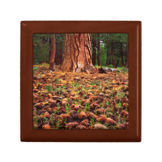 Old-growth Ponderosa tree with pine cones Jewelry Box