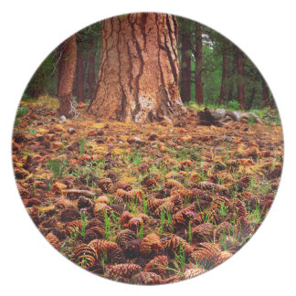 Old-growth Ponderosa tree with pine cones Melamine Plate