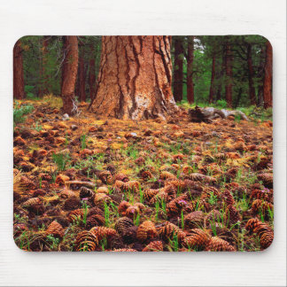 Old-growth Ponderosa tree with pine cones Mouse Pad