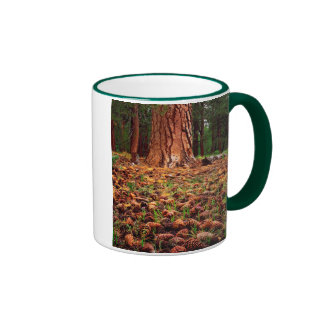 Old-growth Ponderosa tree with pine cones Ringer Mug