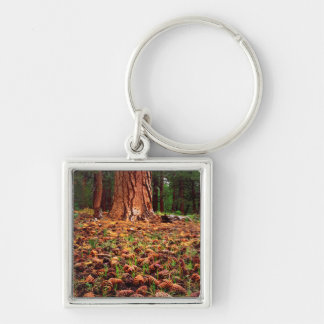 Old-growth Ponderosa tree with pine cones Silver-Colored Square Keychain