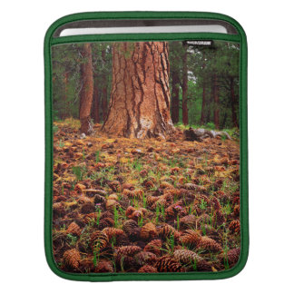 Old-growth Ponderosa tree with pine cones Sleeves For iPads