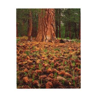 Old-growth Ponderosa tree with pine cones Wood Prints