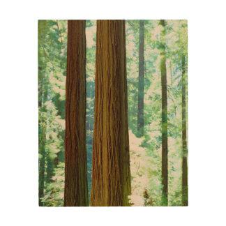 Old-growth Redwood trees Wood Prints